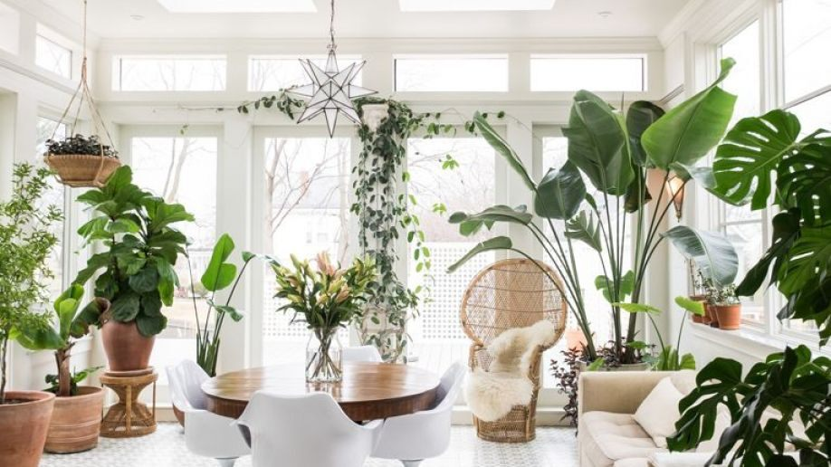 Where and How to Buy House Plants